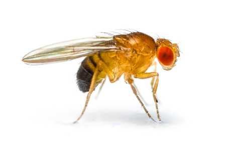 bitte små fluer