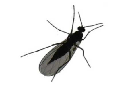 Sm� sorte fluer